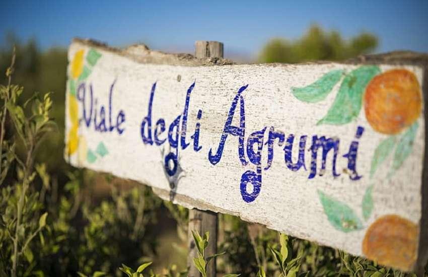 Sicilia Alcamo agrumando in fattoria granita
